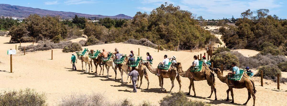Las-mejores-actividades-y-excursiones-que-puedes-hacer-en-Gran-Canaria-1