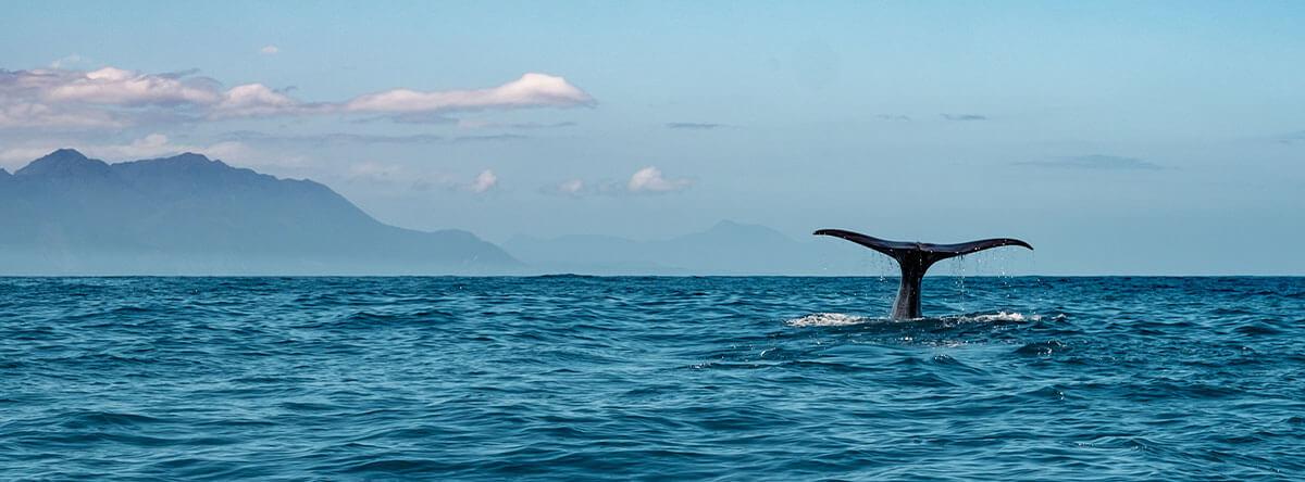ballenas-punta-cana-(3)